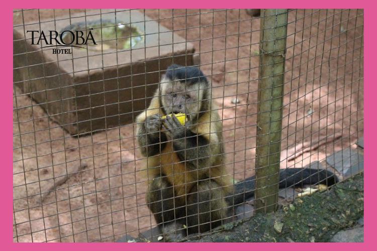 Zoológico Bosque Guarani. 8 passeios gratuitos em Foz do Iguaçu, para você aproveitar a sua viagem!