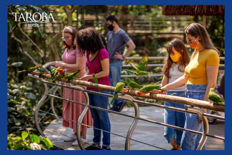 Pessoas alimentando aves. Novidade no Parque das Aves em Foz o Iguaçu - PR