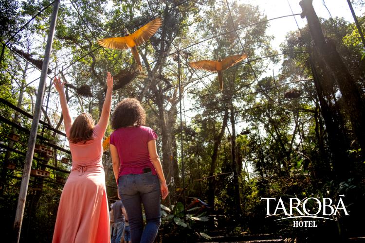 Passeio no Parque das Aves. Parque das Aves em Foz do Iguaçu (Guia 2020)  Hotel Tarobá.