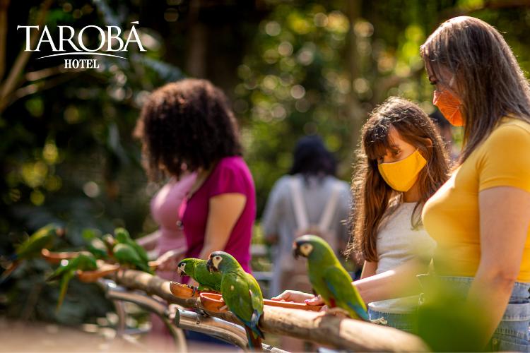 Pessoas alimentando aves. Parque das Aves em Foz do Iguaçu (Guia 2020)  Hotel Tarobá