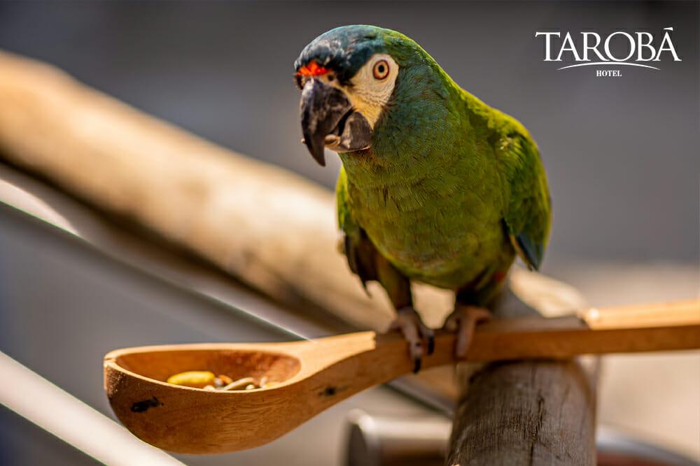 Papagaio no Parque das Aves, um dos maiores atrativos em Foz do Iguaçu